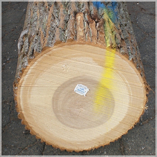 Patriot hardwoods supplier of high grade veneer and saw logs for Is poplar good for furniture