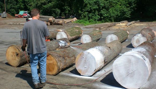 Log Yard Inspection